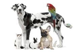 Astra Asigurari lanseaza asigurarea complexa de raspundere civila a proprietarilor de animale de companie