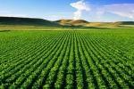 Intesa Sanpaolo ofera fermierilor credite SAPS pe baza adeverintelor emise de APIA