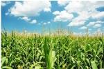 BRD ii finanteaza pe fermierii care beneficiaza de subventii APIA