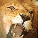 FMI agreeaza un leu mai puternic