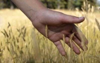 Care sunt conditiile de acordare a creditelor agricole