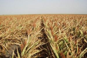 Banca Transilvania lanseaza Creditul Iesirea din seceta, destinat fermierilor