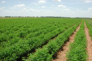 BT si APIA au incheiat o noua conventie pentru sustinerea agricultorilor